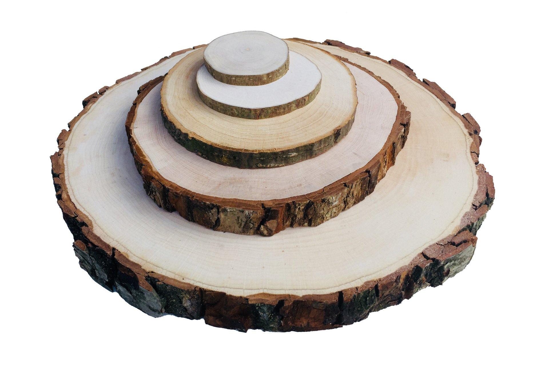 Birkenscheiben Holzscheiben Baumscheiben Astscheiben Hochzeit Birkenscheibe 9-11